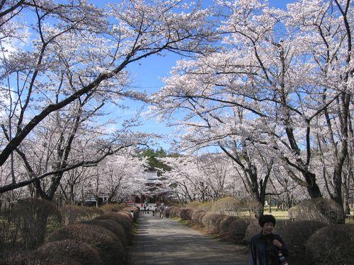 蓼科・聖光寺参道 2009年4月23日