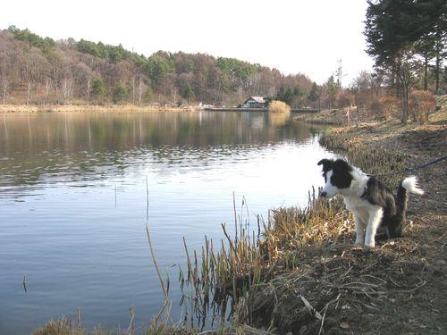 蓼科湖とランディ 2009年3月21日