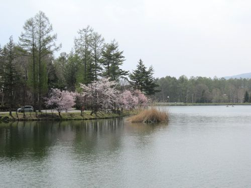 蓼科湖畔の桜 2010年5月5日